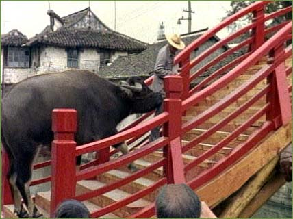 Two ton water buffalo: bridge now safe for the mother-in-law..